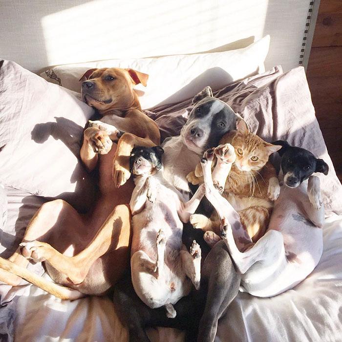 Пара спасла 7 животных