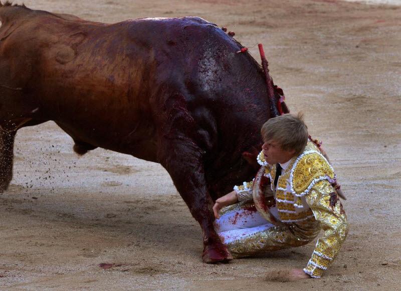 Нападения животных на людей
