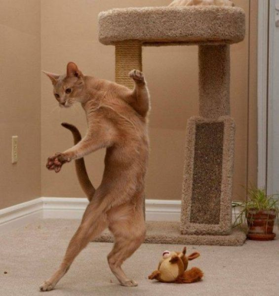 Эти кошки уверены, что Земля крутится вокруг них