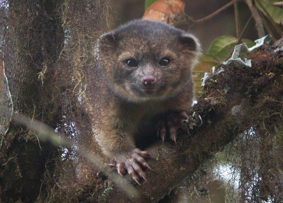 Новые виды животных, которые были открыты в XXI веке