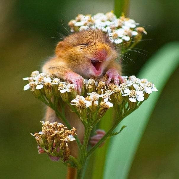 Позитив от улыбающихся животных