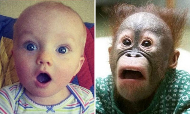 15 фотографий, на которых дети и животные одинаково выражают эмоции