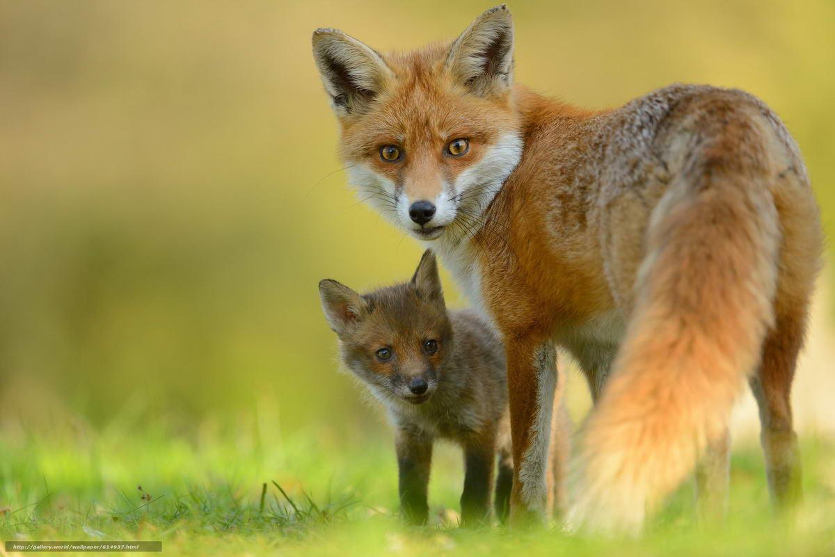 10 самых красивых животных в мире