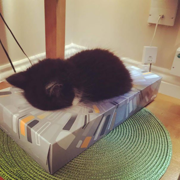 Коты могут спать где угодно и в самых невообразимых позах