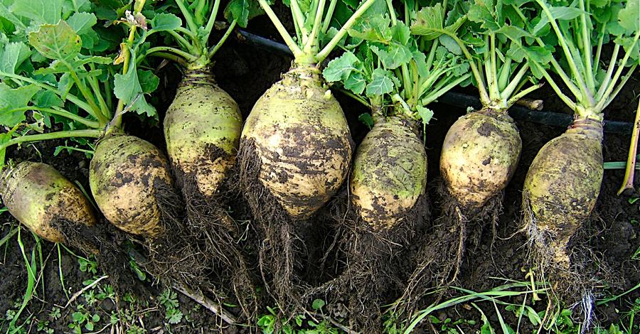 Главные продукты осени, которые сохранят красоту и здоровье