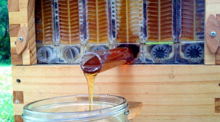 Уникальный улей с автоматическим сбором мёда