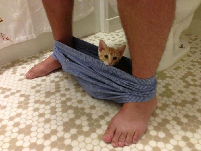Доставучие коты