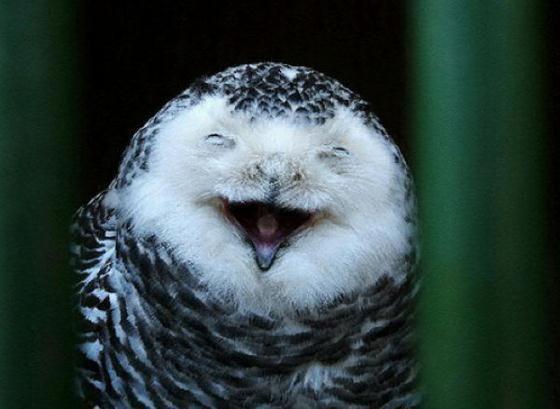 Веселые и милые совы
