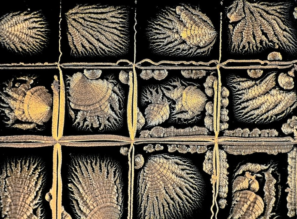 Конкурс микрофотографии Королевского фотографического общества