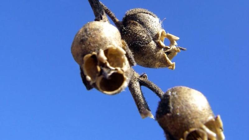 15 странных растений, в существование которых сложно поверить