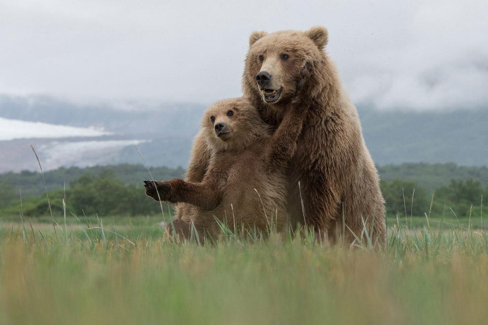 Лучший фотограф природы года от National Geographic