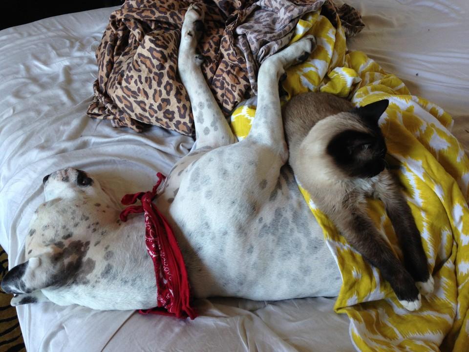 Очаровательная дружба кошек и собак