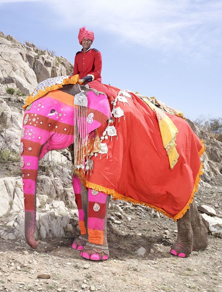 Слоновий боди-арт в Индии