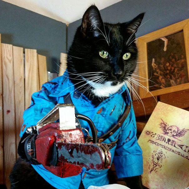 Наряды для кошек на Хэллоуин