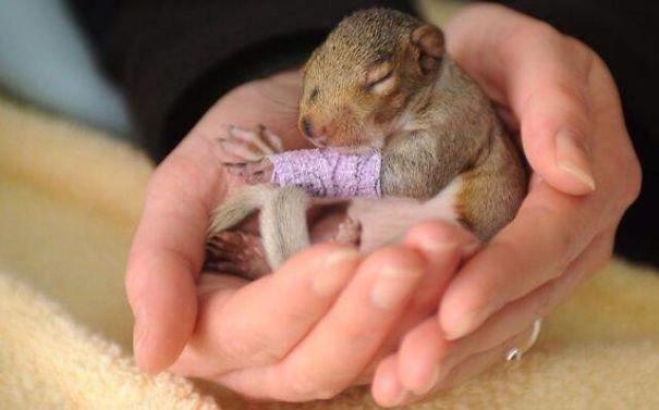 Милые детёныши животных в крошечном гипсе