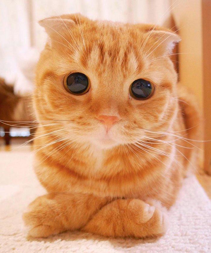 Фото красивых котов мира
