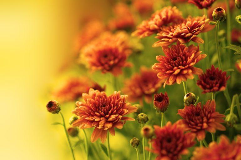 Plantas caseras sin pretensiones que limpian el aire.