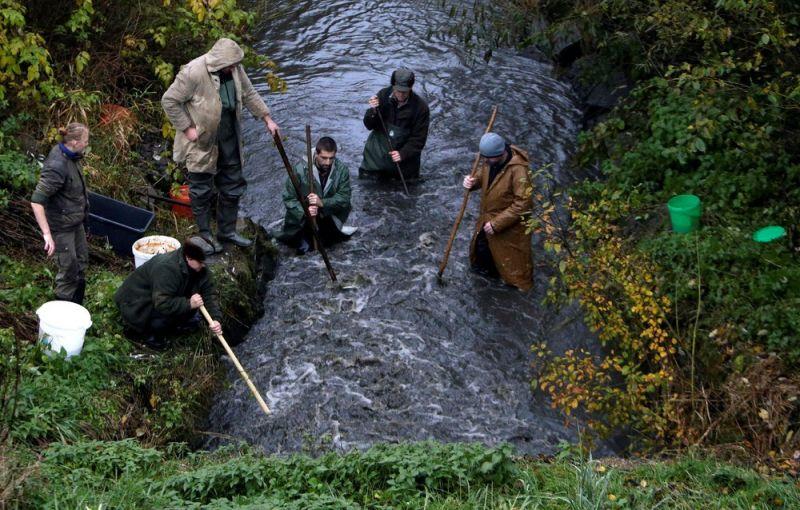В Чехии прошла традиционная ловля карпа