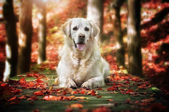 Милые осенние собаки в фотографиях Габи Стиклера