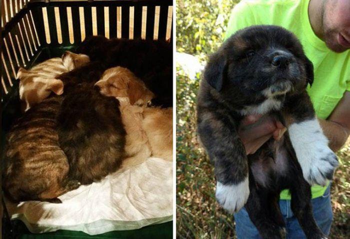 Мальчишник в лесу превратился в заботу о бездомных щенках