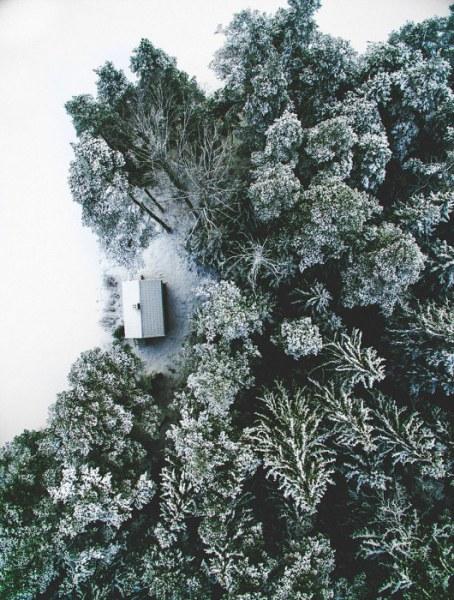 Небольшие домики, которым повезло затеряться в лесу