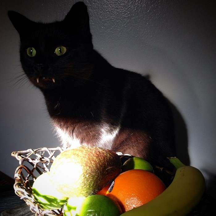 Манок на кота