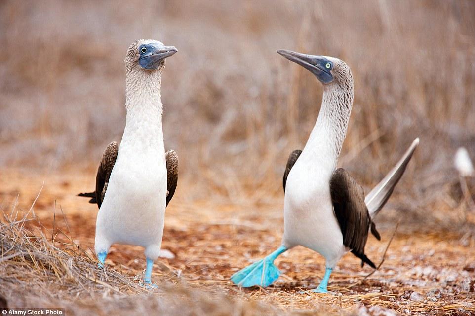 Самые необычные животные нашей планеты
