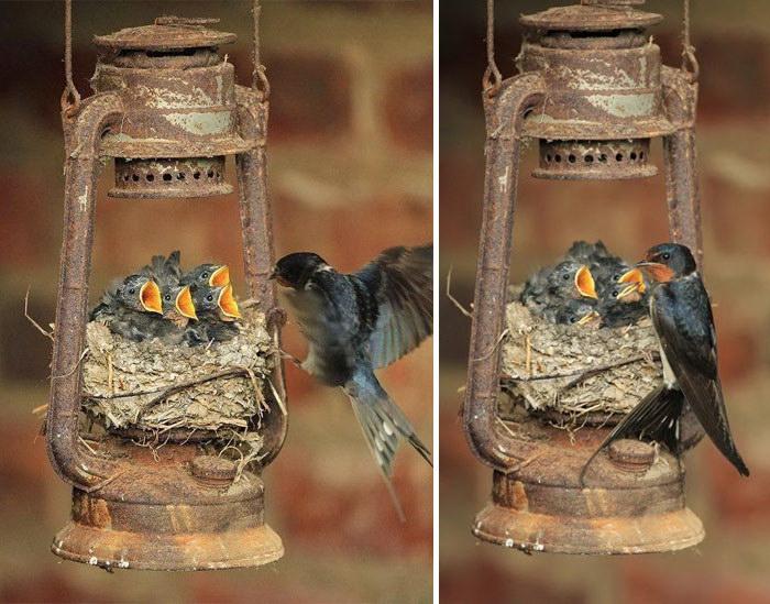 Мамочки-птицы рядом со своими птенцами