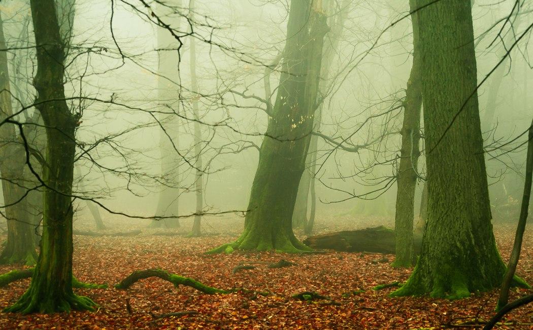 Красота лесов в Германии