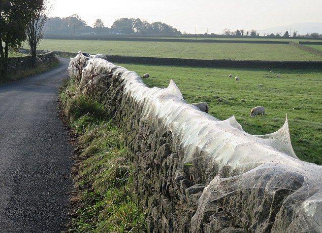 Нашествие пауков на британской ферме