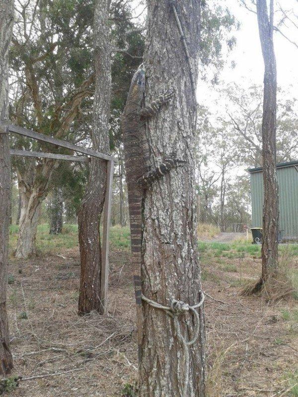 19 пугающих обитателей австралийских задних дворов