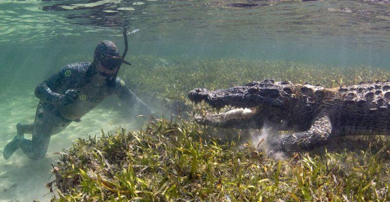 Как профессионалы делают подводные фотографии крокодилов