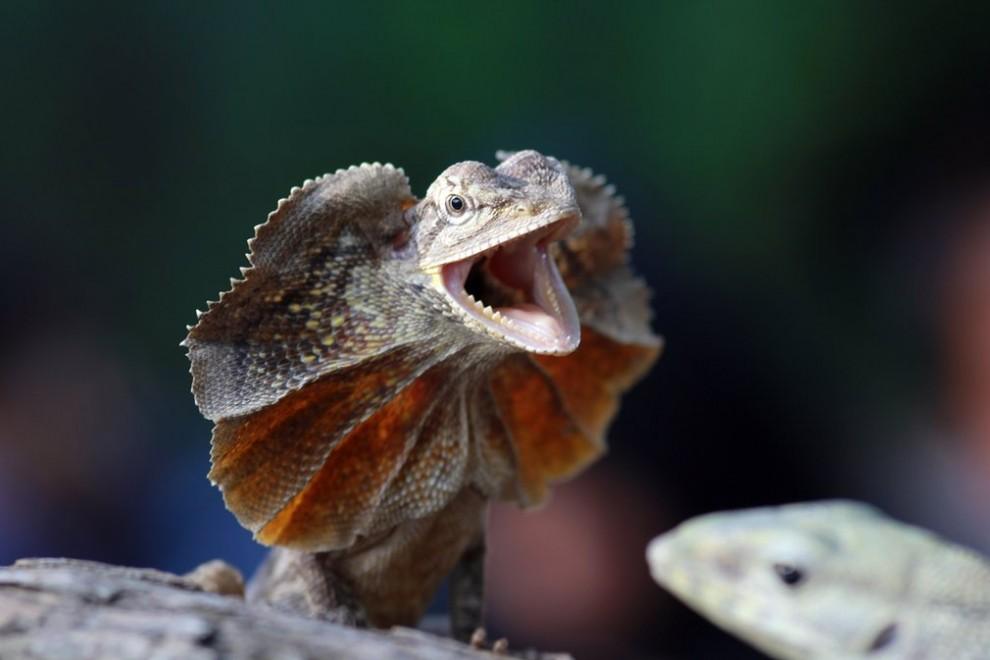 Жизнь животных и природа на фотографиях