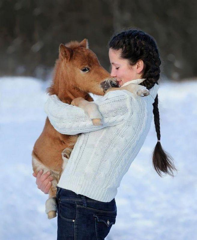 Дружелюбные миниатюрные лошадки