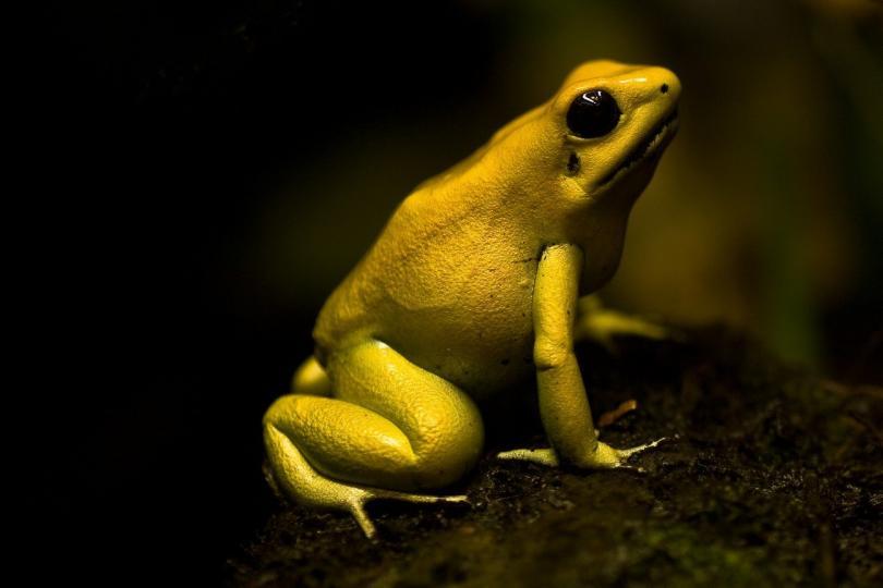 Самые маленькие и смертельно опасные существа на Земле