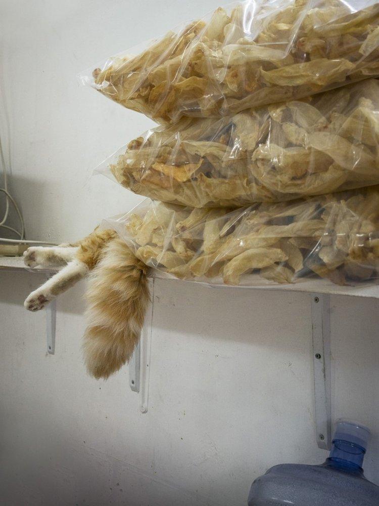 Коты в гонконгских магазинах