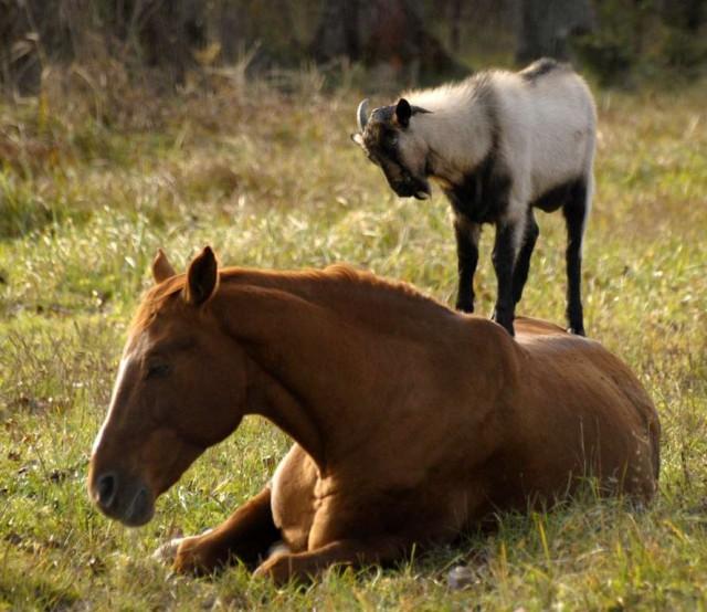 Любители бесплатного проезда в мире животных