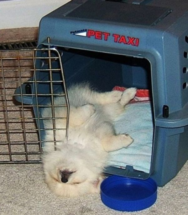 Милые фотографии спящих щенков