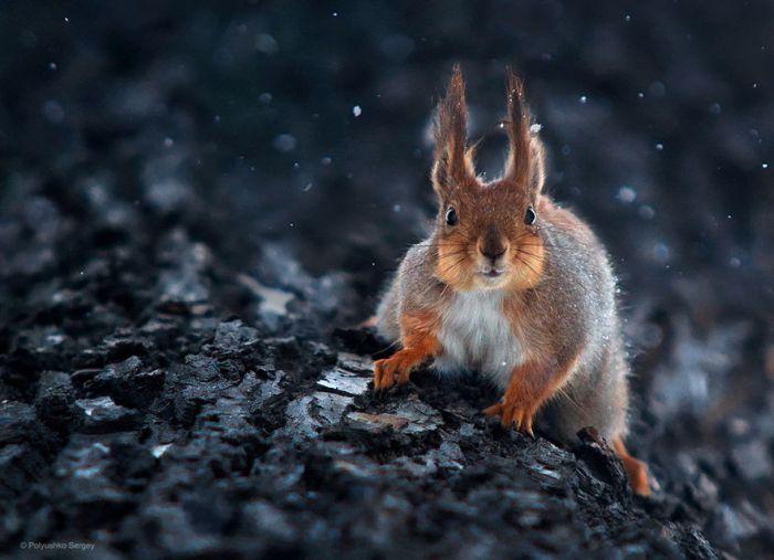 Портреты животных от Сергея Полюшко