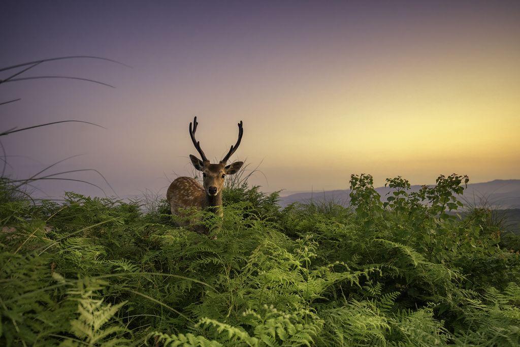 Лучшие фотографии ноября 2016 от National Geographic