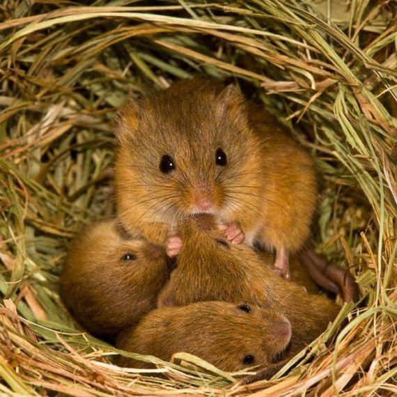Фото из жизни мышей