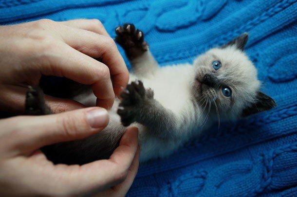 Фотографии очаровательных котят