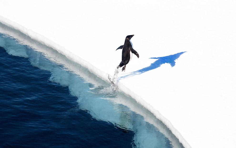 Крупнейший в мире морской заповедник в Антарктике