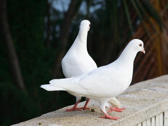 Немного интересных фактов о животных