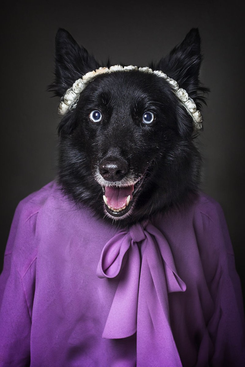 Портреты собак в образе людей
