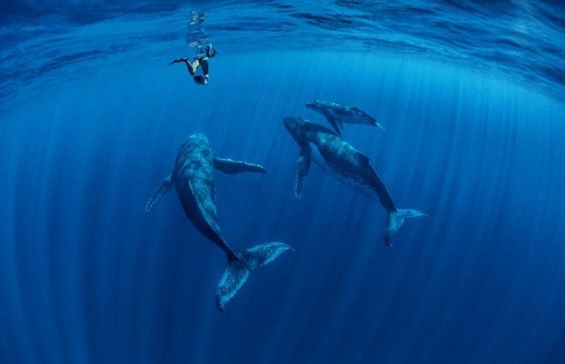 Потрясающие снимки китов