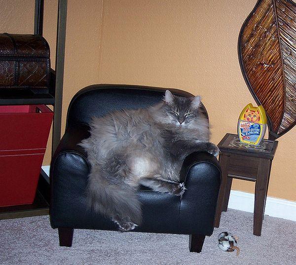 Жутко располневшие коты