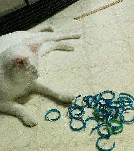 Коллекции вещей, утянутых кошками