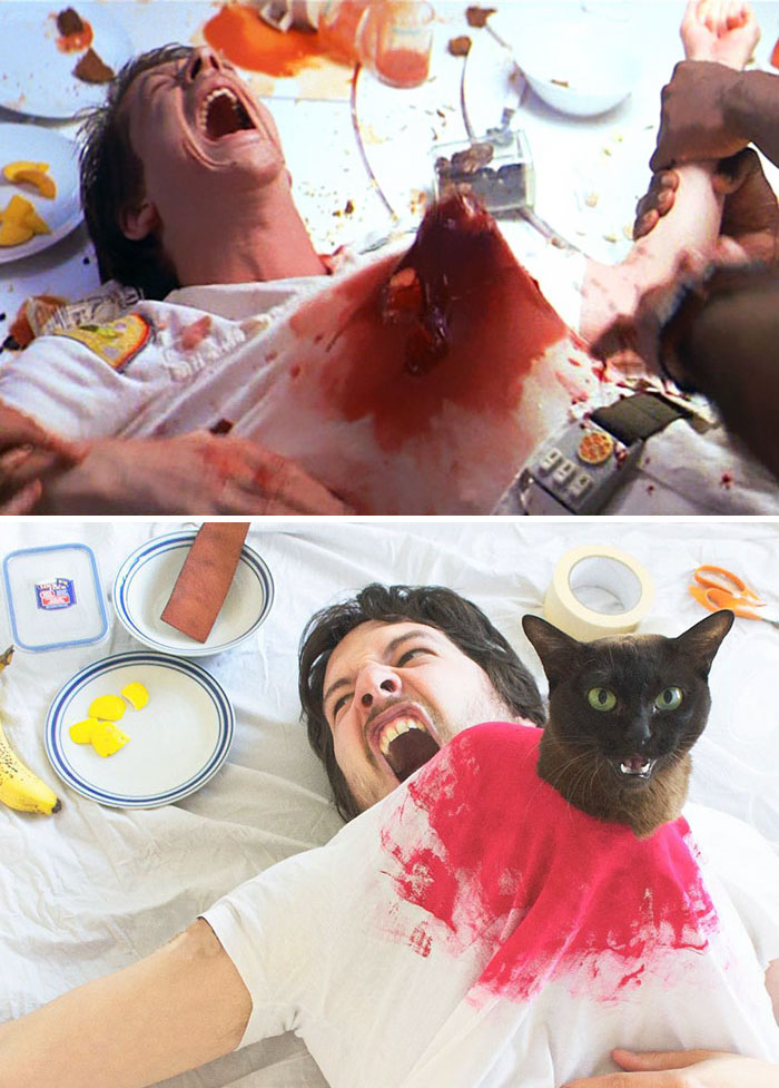 Пародии на культовые сцены из фильмов с котами