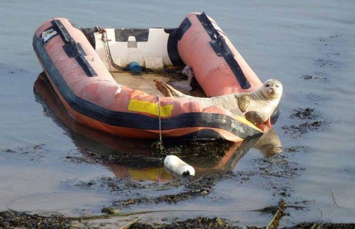 Необычные лодки и их пассажиры